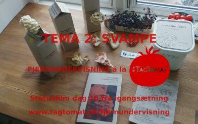 Fjernundervisning Tema 2 – Svampe – Statusvideo dag 10