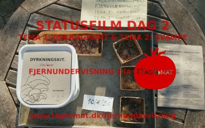 Fjerundervisning Tema 1 og 2 – Mikrogrønt og svampe – Statusvideo dag 2