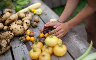 Åben Skole: Forløb 7 – Planteformering og afgrøder