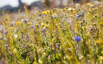 Undervisningspakke Tema 4: Blomsterhav i din institution – lav buketter og høst frø – Guide